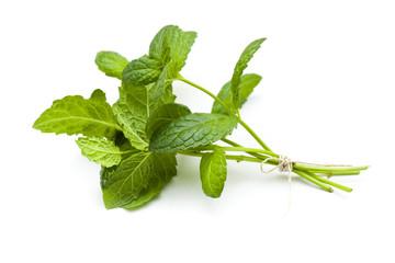 Mint twig