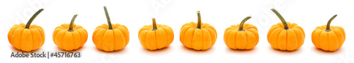Autumn border of pumpkins in a row with white background