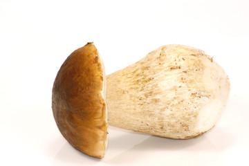 cèpe de bordeaux