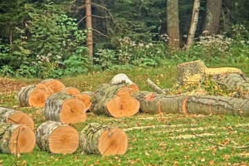 felling of trees