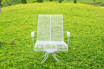White chair on  Pinto Peanut plant