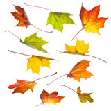 Collection of autumn leaves in motion