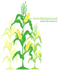 Corn Stalks Illustration