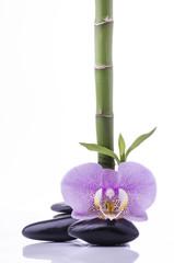 bambù con orchidea