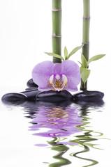 orchidea con bambù