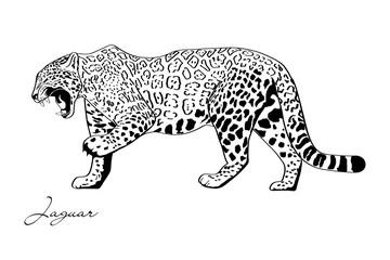 vector jaguar