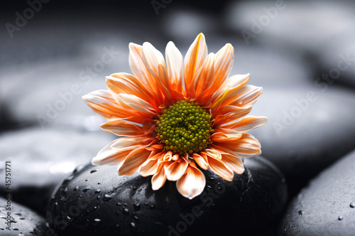 Single gerbera flower on pebbles