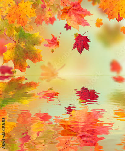 Autumn maple leaves with water surface