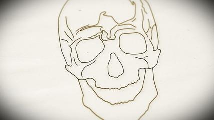Human Skull structure animation illustration Shallow Depth of Fi