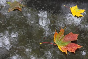 Autumn leaf on the ground in rain