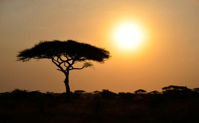 Rising Sun shinning with single Acacia tree in Africa