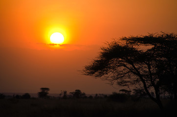 Sunset over African Savannah with tree in foreground
