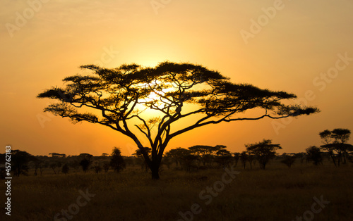 Rising Sun shinning through an Acacia Tree in Serengeti