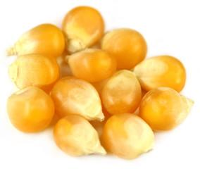 Corns over white background