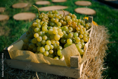 White grapes in a box on the hay