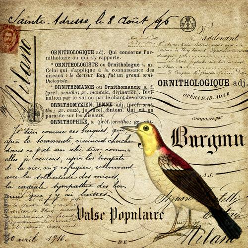pismo-kaligraficzne-i-ptak