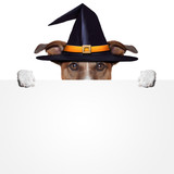 halloween placeholder banner dog poster