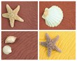 four sandy backgrounds with shells and starfish