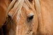Fototapeten,pferd,ritter,prinz,märchen