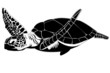 The hawksbill sea turtle (Eretmochelys imbricata) - 45804930