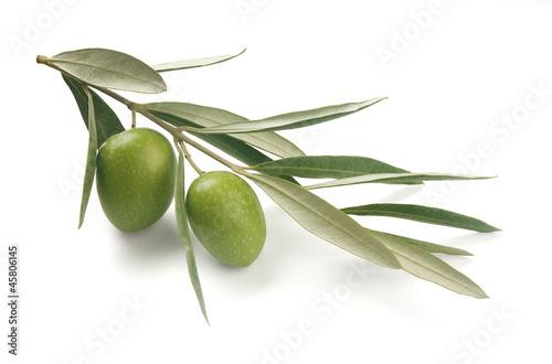 Aluminium Olijfboom Olive branch