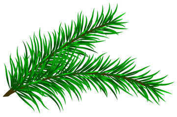 Vector illustration of fir branches