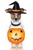Fototapety halloween pumpkin witch dog