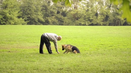 Dog trainer feeding and doing exercise with Alsatian