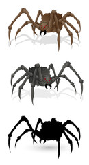Spiders Illustartions