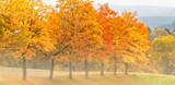 Fototapeta drzew - światło - Las