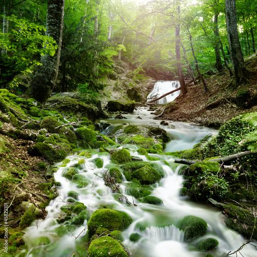 Fototapete wald wasser  Fototapete Wald - Grün - Bach / Fluss - Naturgewalten - Pixteria