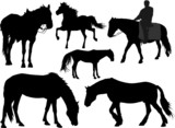 Vector set of silhouettes of a horse