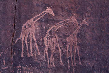 Rock paintings of giraffes