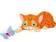 Kitten plays with the butterfly