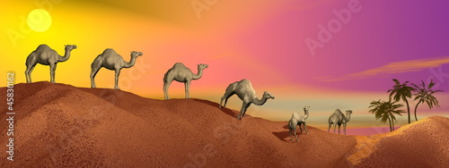 Fototapeta Camels in the desert