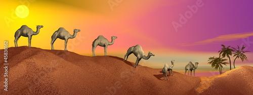 Naklejka Camels in the desert
