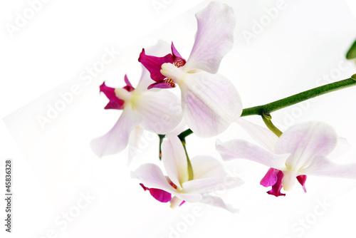 Fototapeten,hintergrund,schön,blühen,botanik