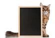 Cat with blackboard