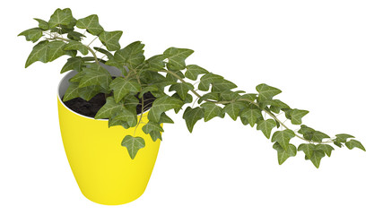 Ivy growing in a yellow pot