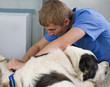 veterinarian doctor making a checkup