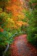 Beautiful bike trail through park in autumn