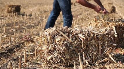 Farmer in Field Checking Straw Bales
