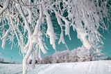 tree in snow on celestial background poster