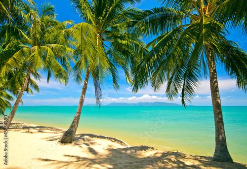 Tropical Beach Koh Samui