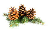 Fototapety Fir branches with cones isolated on white background