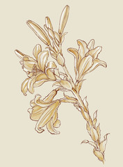 Flowers Lilies. Based on drawing of Leonardo da Vinci