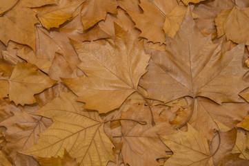 Herbstlaub - Herbstblätter