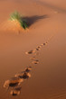 canvas print picture Footsteps in the Sahara Desert