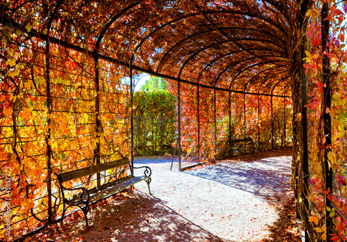 Papiers peints Vienne Deep red plant tunnel with autumn leafs
