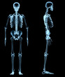 human skeleton under the x-rays